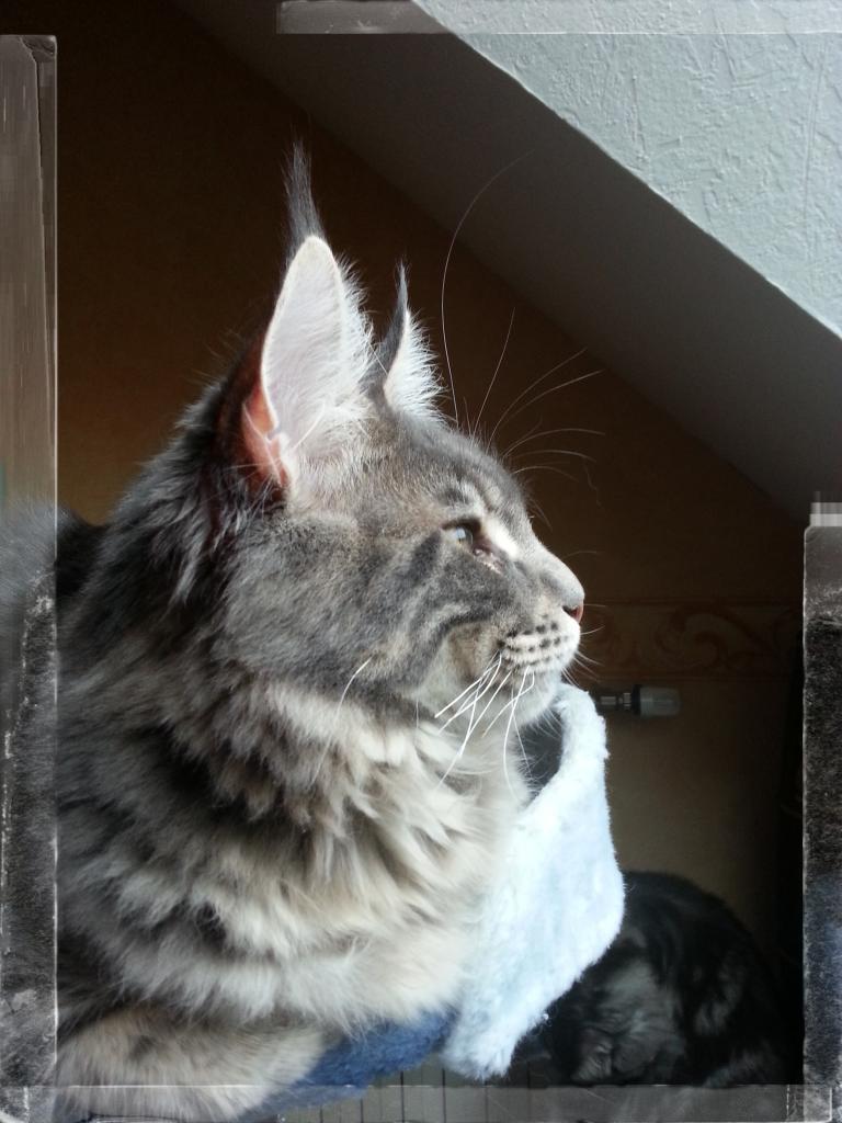 profil de mon petit prince
